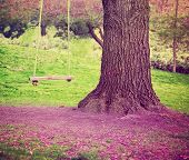 big tree with swing on a purple field