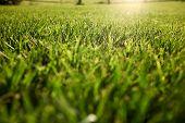 Grass background, Tuscany hills