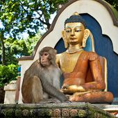 Monkey Sitting Near Buddha Statue At Buddhist Shrine Swayambhunath Stupa. Monkey Temple. Nepal