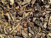 Mulch Woodchips Texture