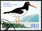 Oystercatcher Stamp