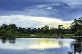 Pantanal landscape, Brazil