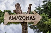 Amazonas wooden sign on a forest background