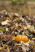 Halloween pumpkin in a fall nature environment