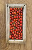 pic of wild-brier  - wild rose hips background in small old wooden window frame - JPG