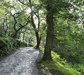 Footpath in relict forest after rain.