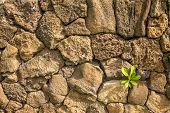 Vintage Lava Wall