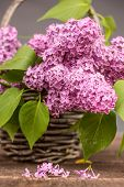 picture of lilac bush  - basket with a branch of lilac flower on a wooden surface - JPG