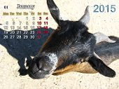 Calendar For January Of 2015 Year With Goat
