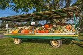 stock photo of gourds  - A large farm trailer offering gourds of all sizes shapes and colors for sale - JPG