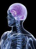 xray torso and head