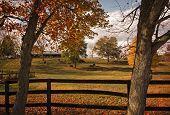 Horse Farm In Autumn