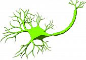nerve cell with dendrites