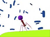 bacteriophage attacking bacterium