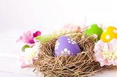 stock photo of bird egg  - Easter eggs in a bird - JPG