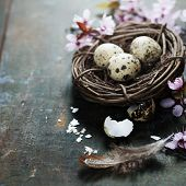 picture of quail egg  - Quail easter eggs in a nest  and spring cherry blossoms on wooden table - JPG