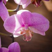 picture of orquidea  - Very rare purple orchid - JPG