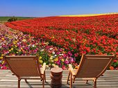 pic of buttercup  - Two chaise lounges for rest stand on a scaffold at a picturesque flower field - JPG