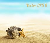 picture of starfish  - Shell and starfish on sandy beach vector illustration EPS 8 - JPG