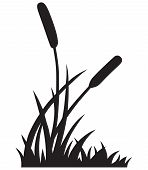 stock photo of cattail  - Silhouette reed - JPG