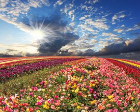 foto of buttercup  - Spring cloud illuminated by the sunset - JPG