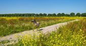 image of wild horse running  - Foal running in a field with wild flowers in summer