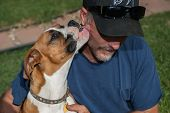 image of licking  - Boxer puppy licks tongue into masters ear - JPG
