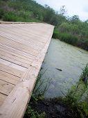 stock photo of wetland  - A wood boardwalk through the green wetland - JPG