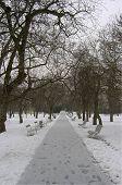 Prague Park In Winter
