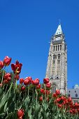 Parliament Hill And Tulip Festival