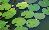 foto of chloroplast  - Macro of green leaves in water - JPG