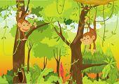 Illustratie van een cartoon aap op wit