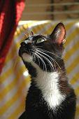 Posing Cat poster