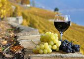 picture of red wine  - Red wine and grapes on the terrace of vineyard in Lavaux region - JPG