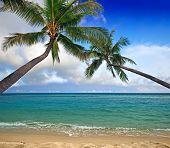 Постер, плакат: Кокосовые пальмы над морем