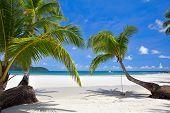 Постер, плакат: Дерево пальмы листьев на тропический пляж
