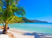 Summer holidays on white sand beach under blue sky and green palm tree
