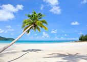 Tropical beach with beautiful palm trees on the sand and sun in blue sky. Summer nature scene.