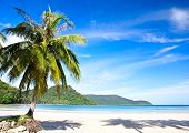 Summer sunny beach with tropical palm tres under blue sky. Exotic nature scene.