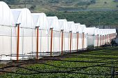 Perspective of greenhouses
