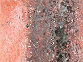 alten Putz der verschimmelt Wand