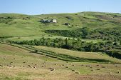 countryside of sicilian hinterland with farmhouse