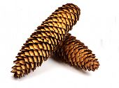 Cones on white background