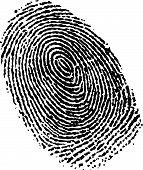 pic of fingerprint  - A fingerprint in vector format - JPG