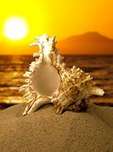 Sea shell on the beach with sunset