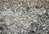 Grey ash texture