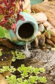picture of water cabbage  - Clay water feature near a pond - JPG