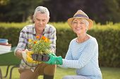 Happy senior couple gardening together in backyard poster