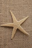 Close Up View Of Starfish Texture And Background. Natural Starfish In Vintage Background. poster