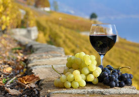 pic of red wine  - Red wine and grapes on the terrace of vineyard in Lavaux region - JPG